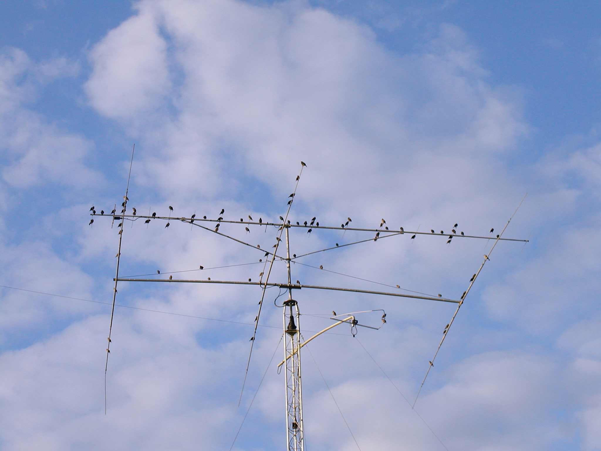 Ham Radio Antenna Ham radio operators like birds